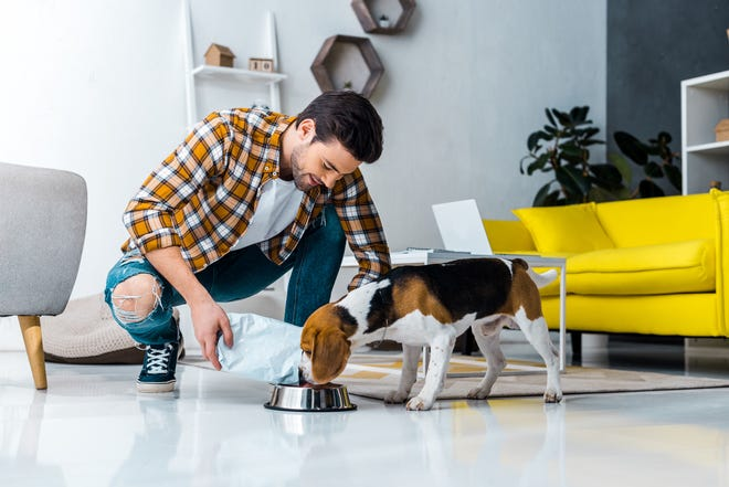 Every dog has unique dietary needs and preferences. That's especially true for different breeds and ages. The key is finding the right meal for every dog.