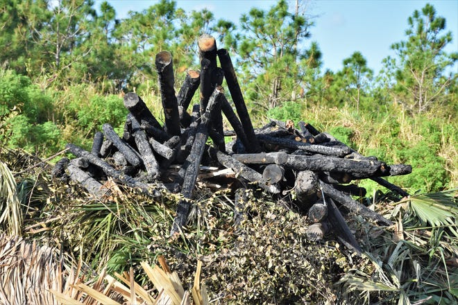The charred remains of a chickee that caught fire at Riverbend Park's re-created Seminole village last week.