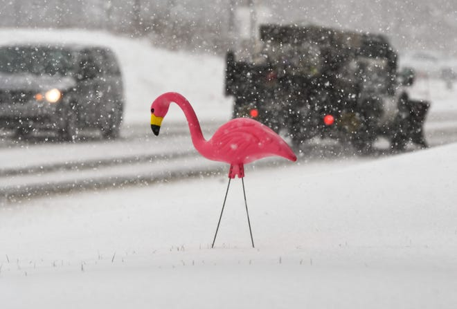 A decorative pink flamingo seen in the snow in this file photo taken Feb. 26, 2020 in front of the Michigan State University Tree Research Center. [Matthew Dae Smith/Lansing State Journal]