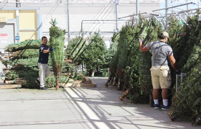 Walmart employees unloading Christmas trees in Alice, Texas.