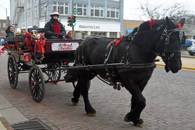 FILE: Holly pulls a carriage full of riders around Galesburg during the Galesburg Express Festival.