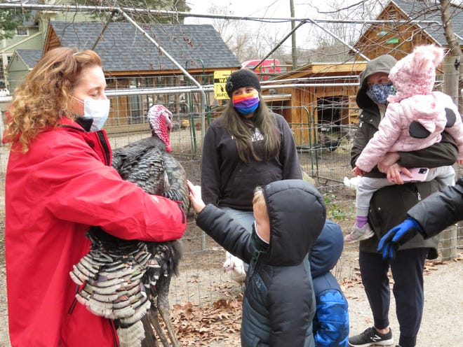Marla Andrews, left, holds Paul the turkey for visitors to pet during a tour of Unity Farm Sanctuary in Sherborn on Nov. 25.