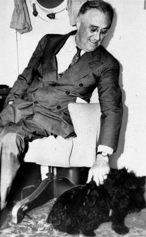 Dalam file foto tahun 1939 ini Presiden Franklin D. Roosevelt memelihara Fala, anjing terrier Skotlandia-nya di Washington.