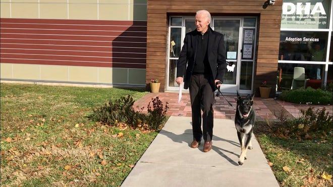 Foto 16 November 2018 ini, file yang disediakan oleh Delaware Humane Association menunjukkan Joe Biden dan Mayor Gembala Jerman yang baru diadopsi, di Wilmington, Del.