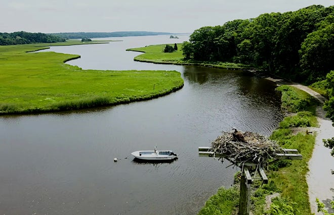 From the feature film, an osprey nest on West Branch of Westport River.