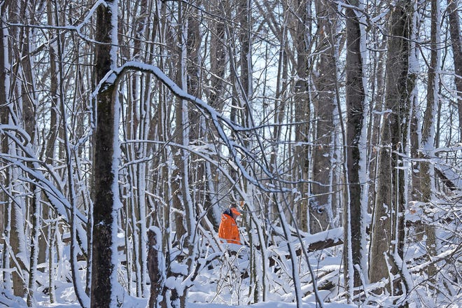 A hunter can easily be seen in his blaze orange jacket against the white snow near the Clear Fork Reservoir during Ohio's recently completed deer-gun season. A bonus weekend is set for Saturday and Sunday.