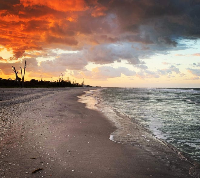 No red tide conditions were apparent early Thursday morning on Manasota Key, according to turtle watcher Don MacAulay.