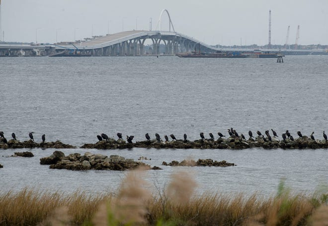Various seabirds roost on the exposed rocks along Bayfront Parkway on Thursday as construction on the new bridge over Pensacola Bay continues in the distance. The Pensacola and Perdido Bays Estuary Program awarded a nearly $13,000 grant to train marine contractors in building similar shoreline projects.