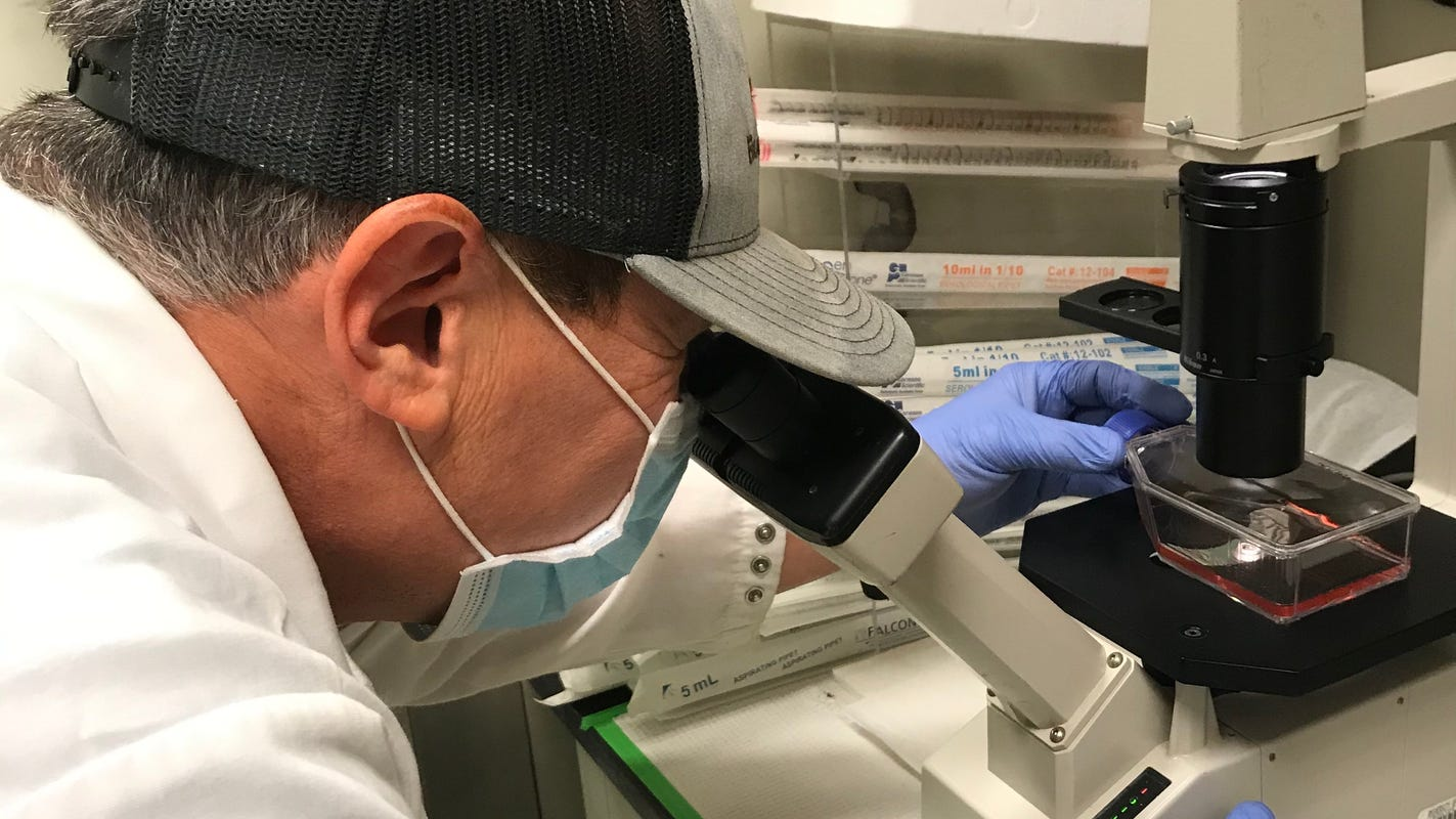 Arizona researchers discover potential new genetic target against COVID-19 infections
