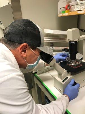 Molecular biologist Gonzalo Almanza examines samples containing miR1307 in professor Maurizio Zanetti's lab at the University of California San Diego.