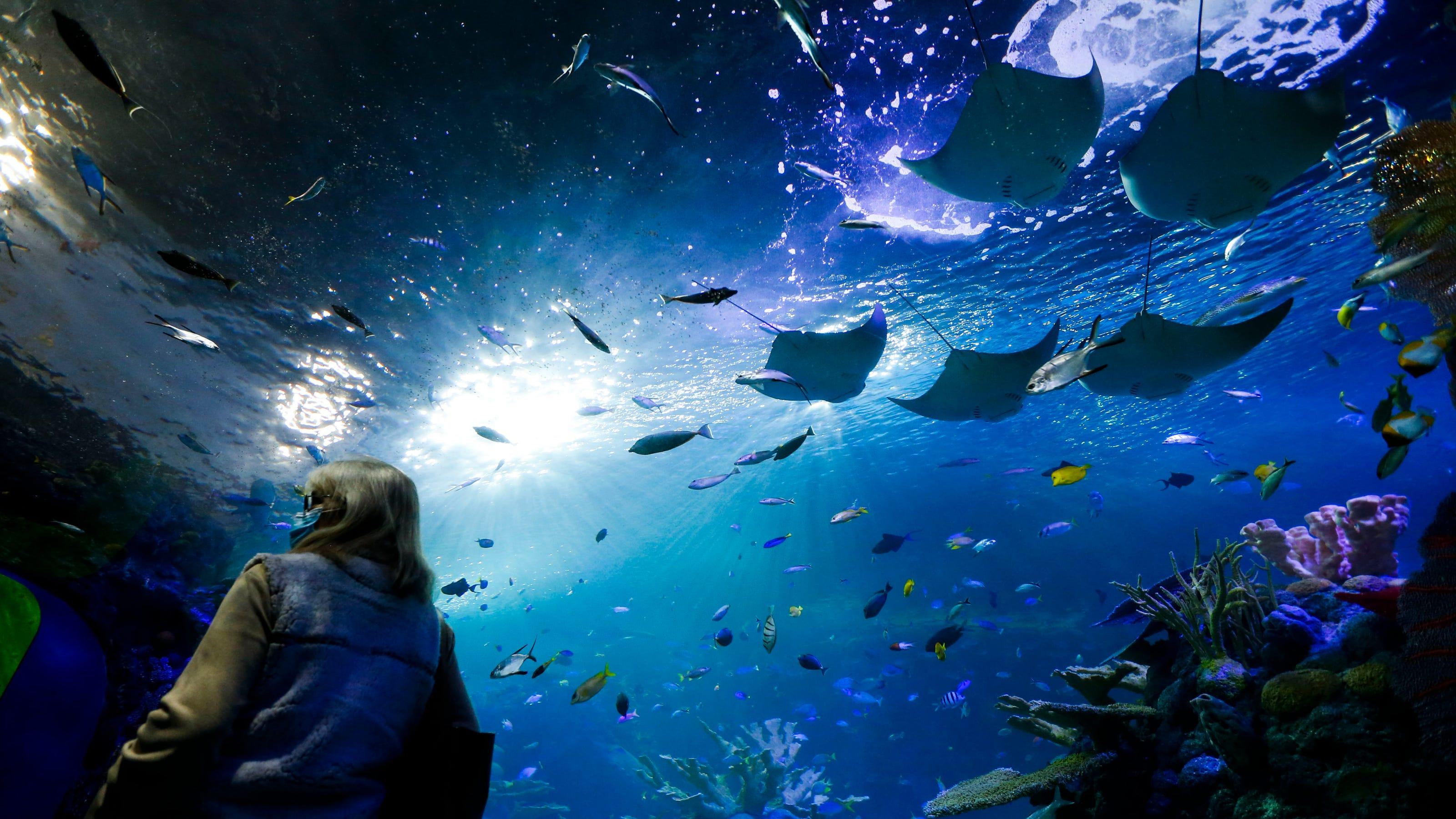 $55 million Aquarium at the Boardwalk now open in Branson