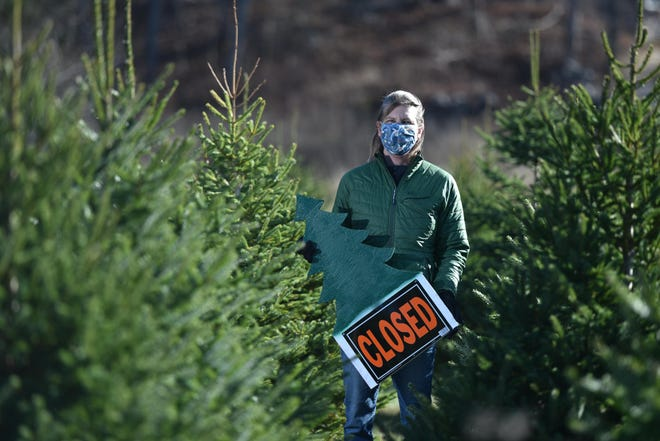 Mary Bunker Ryther stands among 10-year-old white spruces at the Bunker Tree Farm in Falmouth. Because of the summer drought and the pandemic, the farm is not opening this season to sell cut-your-own trees