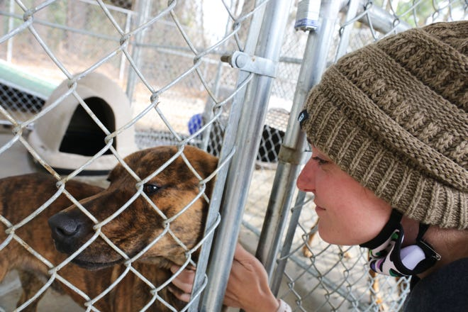 SPCA assistant manager Emily Fortney pets a dog at the shelter, located at 2455 Rouse Road Ext., Friday, Dec. 4.