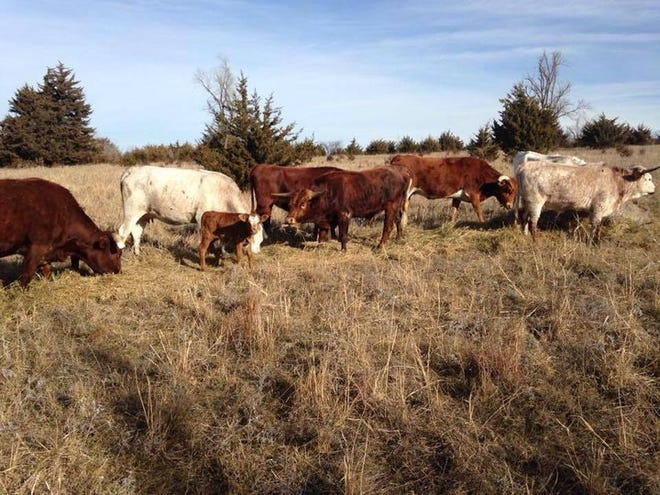 Winter cattle prices are fluctuating in response to supply and demand with a trend toward helping the cattleman.