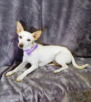 Lucas is an active boy so he needs a house with a yard where he can run and play outdoors with his family.