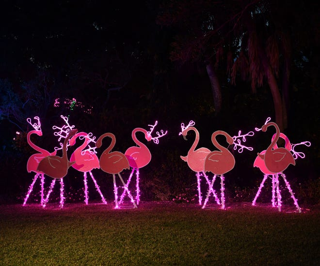 """Bright pink Florida Reindeer with lighted """"horns"""" have become a signature creation at the annual Lights in Bloom open-air holiday light show at Marie Selby Botanical Gardens opening to the public on Saturday."""