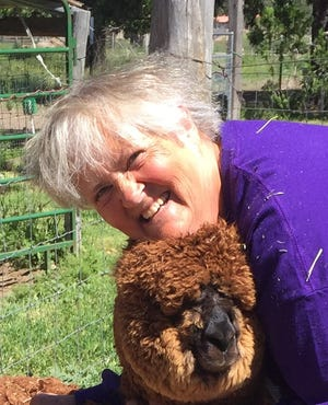 Nancy Shelton of weed nuzzles one of the residents of her 5-acre ranch Alpaca on the Rocks.