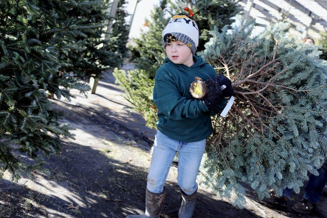 Case Myers, 7, helps his uncle Ryan Whitaker, not pictured, carry a customer's tree to the bailing station Saturday, Dec. 5, at Myers Tree Farm in Sperry. The Myers Christmas tree farm began in 1987 and has over 5,000 Christmas trees, including Scotch Pine, White Pine and Norway Spruce growing on 25 acres.