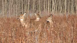 Open season for public input on deer management