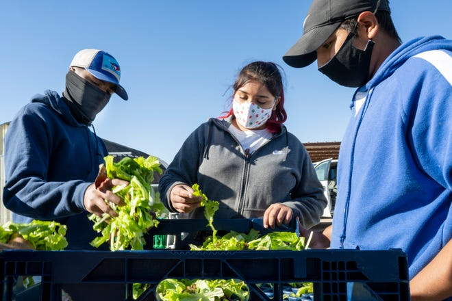 Left to right: Valentin Armijo, Monique Hernandez and Juan Gonzalez package salad greens at Anthony Youth Farm. The Youth Farm employs young people from the area, providing them training and work experience in farming organic produce for distribution through food donation programs in the region.