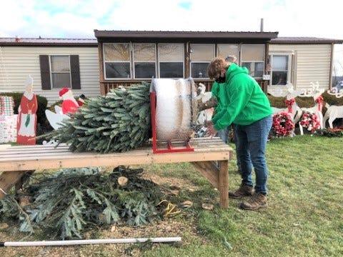 Maddox Walter puts a Christmas tree through the baler.