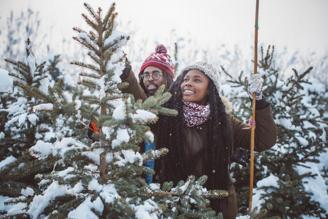 Before cutting down a real Christmas tree, make sure to measure your space at home and the tree to make sure it will fit.