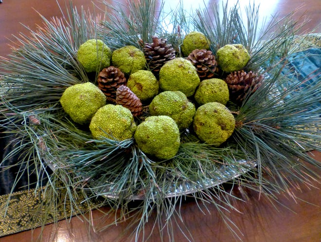 A winter centerpiece of spherical, bright lime green Bois d'Arc fruit and mature pinecones nestled in Afghan and Austrian pine boughs brings a natural texture to the table.