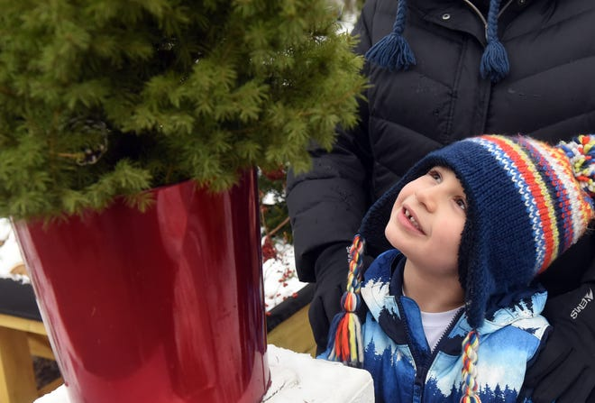 George O'Brien, 6, of Durham looks up at the Christmas tree that was given to his family to replace one that was stolen. He says he really likes it.