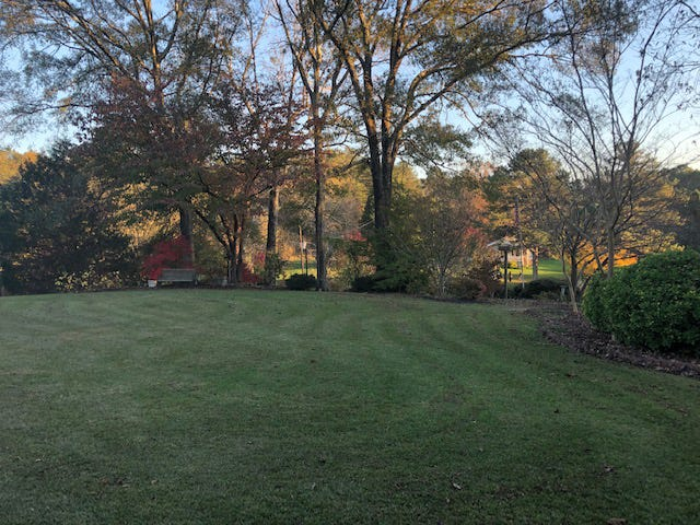 At the time this photo was taken, the hill was alive with fall colors from all the trees and shrubs, and Oscar had just finished clearing the front yard of leaves.