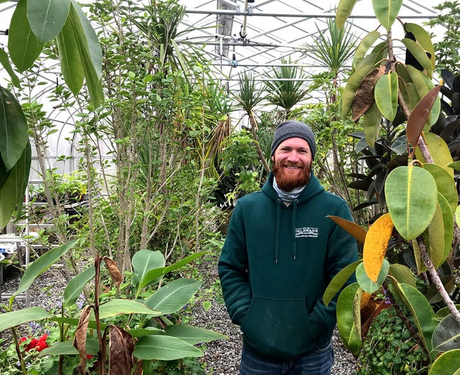 Delaware city arborist Casey McCarty stands among rubber trees and other plants in the city greenhouse at the city's Parks & Rereation and Public Works facilities, 440 E. William St. The potted rubber trees are placed near the city splash pad off South Houk Road in the summers, McCarty said.