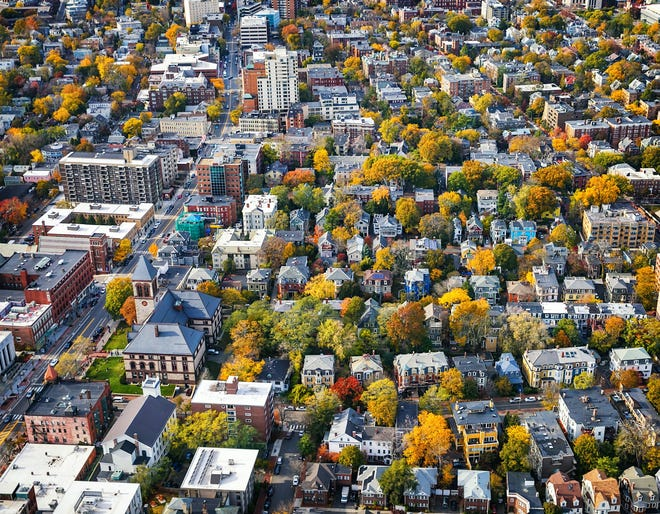 Cambridge's tree canopy has declined considerably in the past decade.