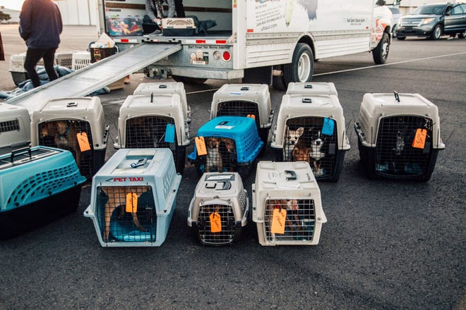 Some of the 73 dogs who were transported from Las Cruces to Portland, Oregon, are pictured Saturday, Dec. 5, 2020