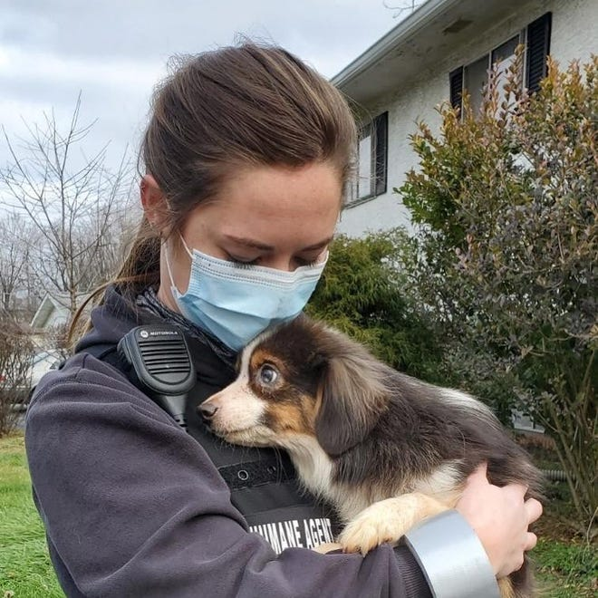A Columbus Humane agent holds an Australian Shepherd, one of more than 40 dogs rescued from a hoarding situation in the Reynoldsburg area on Sunday.