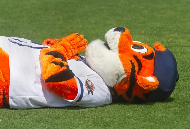 Lakeland Flying Tigers Mascot Southpaw practices yoga along with approximately 60 students prior to the start of a Lakeland Flying Tigers in April 2019.