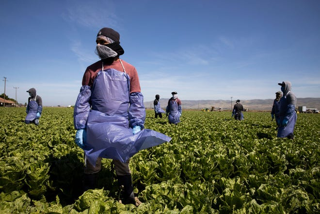 Farm laborers from Fresh Harvest working with an H-2A visa maintain a safe distance as a machine is moved on April 27, 2020 in Greenfield, California.