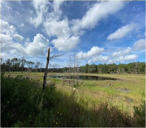 The conservation easement donated by Welaka Woods, LLC includes recharge areas for the Floridan aquifer as well as  ephemeral ponds and sandhill lakes.