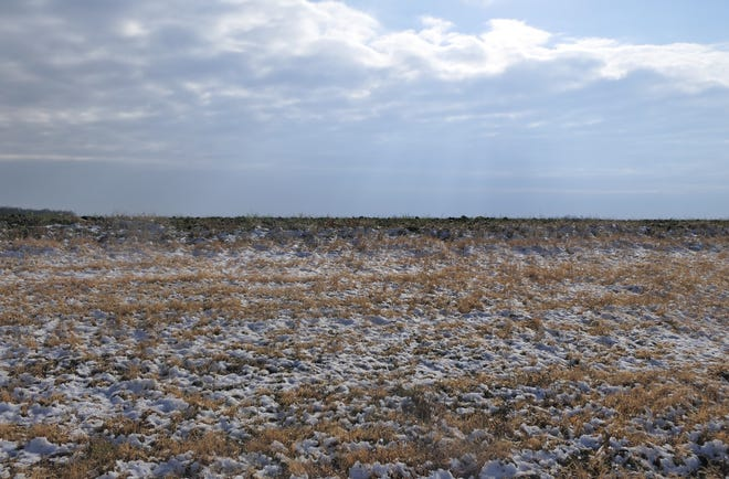 Snow melts on a wheat field in southcentral Kansas.