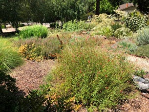 A native garden in my front yard provides habitat for a variety of critters and conserves water.