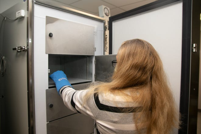 CarolinaEast pharmacy director Janelle Butz shows the inside of the freezer in which Pfizer's COVID vaccines will be stored. [Bill Hand / Sun Journal Staff]