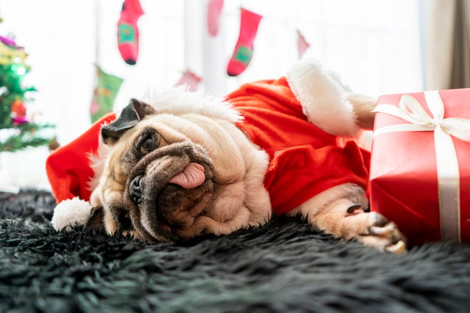 Pamper your pet this holiday season.