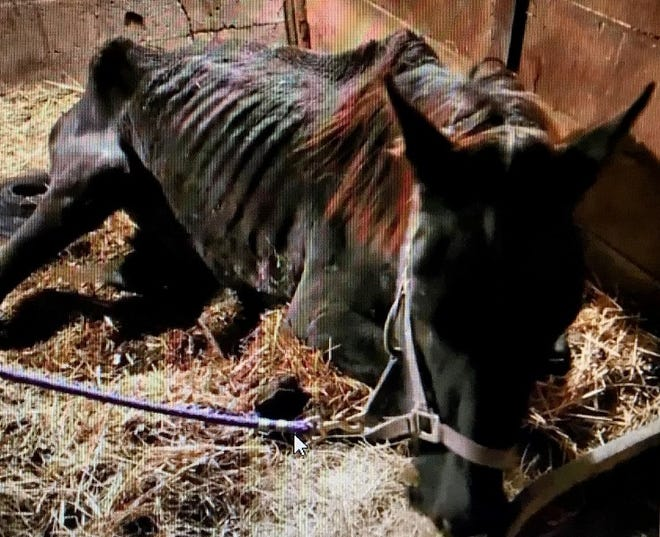 One of six horses, said to be undernourished, seized from a Randolph County property near Union City. The owner has been charged with cruelty to an animal.