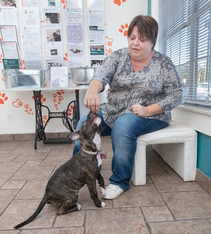 Darra Flanagan, director of community initiatives at the Pensacola Humane Society, gives her dog, Roux, a treat at the organization's new Pet Resource Center at 817 Beverly Parkway in Pensacola on Dec. 9. Flanagan recently adopted the three-month-old dog that was abandoned.