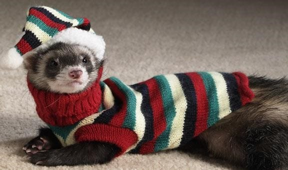 This ferret in a sweater and hat is one example of keeping pets warm in cooler winter temperatures.