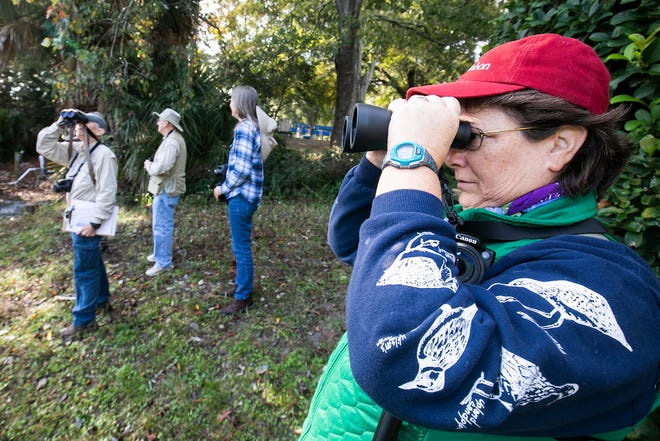 Bird watchers participate in the annual Christmas bird count in 2018 in Marion County. Locally, this year's bird count begins Saturday with the Lake Region Audubon Society count in the Lakeland-Winter Haven area.That will be followed by the Ridge Audubon count on Dec. 26. There is also a count at Avon Park Air Force Range tentatively scheduled for Dec. 30 and a count in the Green Swamp around Colt Creek State Park in early January.