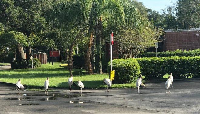 Photo taken in R.B. Hunt Elementary School's parking lot. Waiting for school to start.