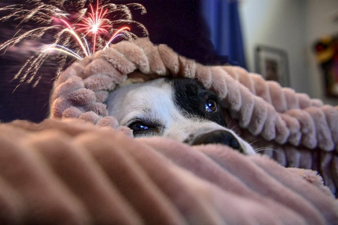 Dogs react differently to outside noise, including fireworks. Some dog owners drown out the noise by playing music, running fans, or a television to keep them calmer.