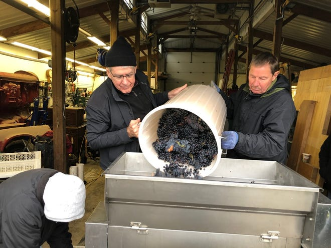 Brad Harford (left) and Paul Dahlke (right) pour grapes into a crusher-destemmer during a previous year's Wisconsin Vintners Association purchase. The club's size and longevity allows it to buy grapes from some of the world's best grape producing regions to allow members a chance to make well-known varietals.