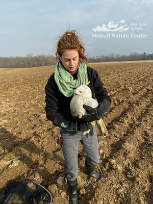 Howell Nature Center Wildlife Park Coordinator Chelsea Hatcher assisted in capturing an injured snowy owl on Friday, Dec. 11, 2020.