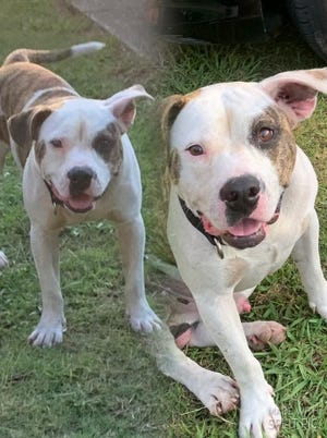 A Montgomery man alleges an unknown woman shot his dog, Rollie, and took the dog's body away in a car.