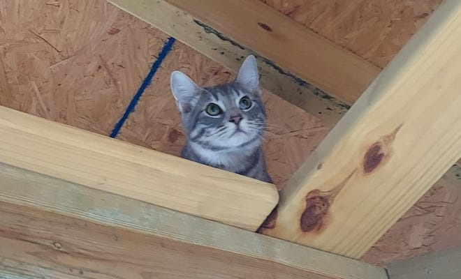 A cat enjoys the rafters of the Animal Rescue Foundation's kitty patio.